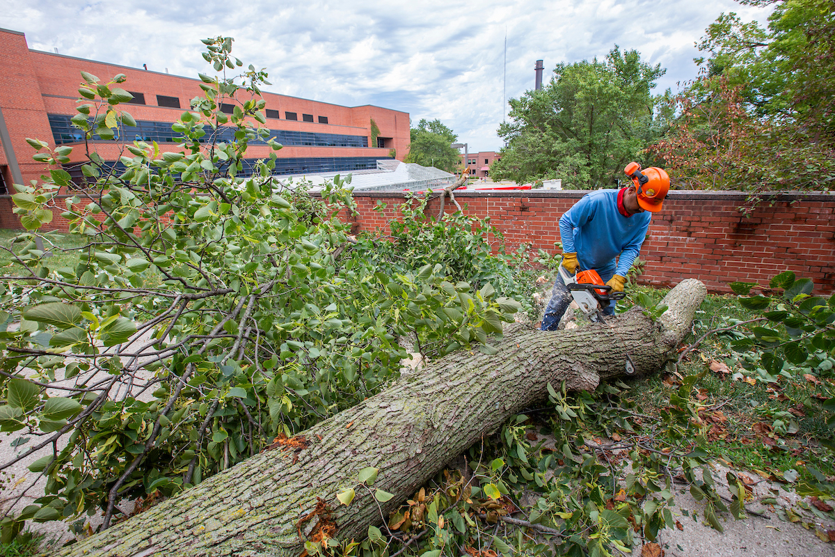 Efrain Ramirez of Campus Services works to clear a downed tree south of Agronomy Hall after the Aug. 10 derecho swept over campus.