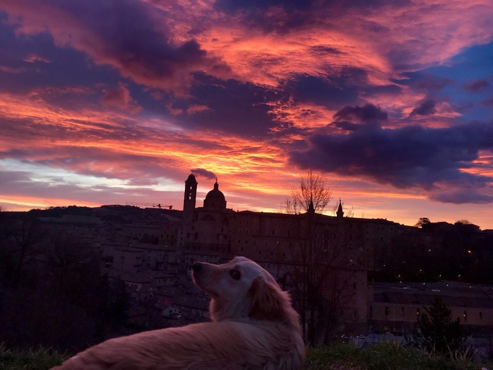 "The sunrise over Urbino. Good friends, a dog and the sunrise are the perfect combination to form a favorite memory. Makenna Chapman said, ""It was cool to see Urbino silent, it was really peaceful."" Photo by Gillian Holte"