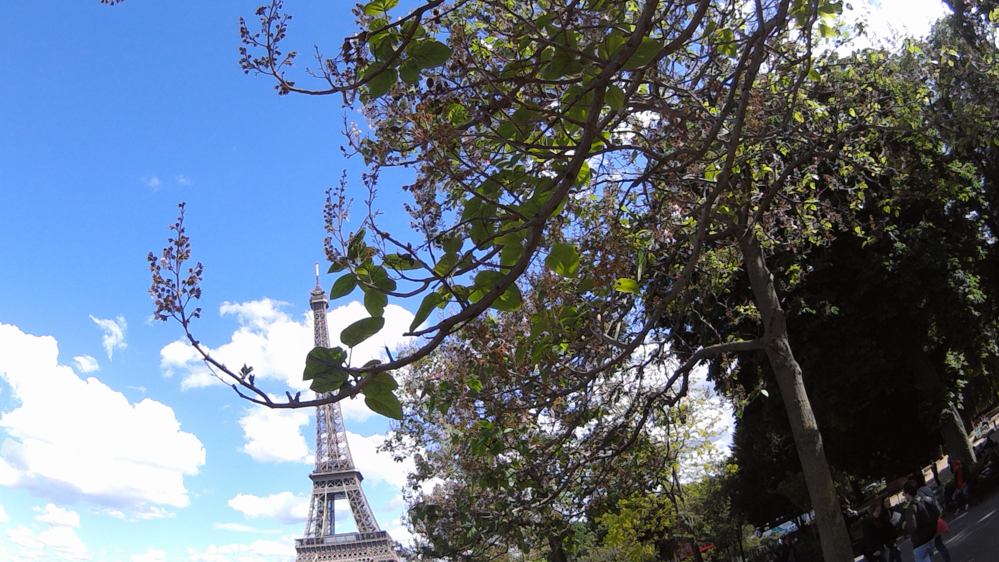 Jean-Luc Del Valle ('19 biology) studied abroad in Paris, France. This photo was taken near the Eiffel Tower.