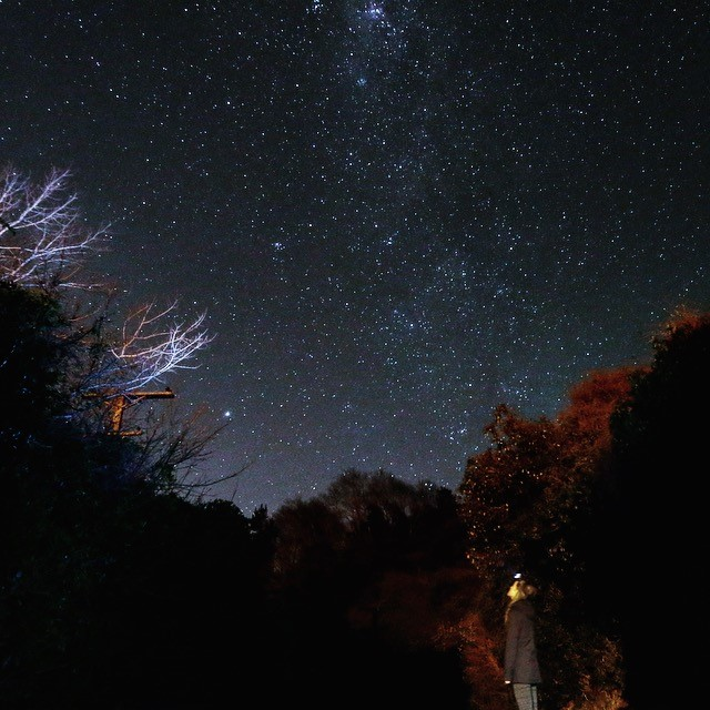 Student Paul Hadish stands in a wooded area, staring up at a starry night sky in Dunedin, New Zealand.