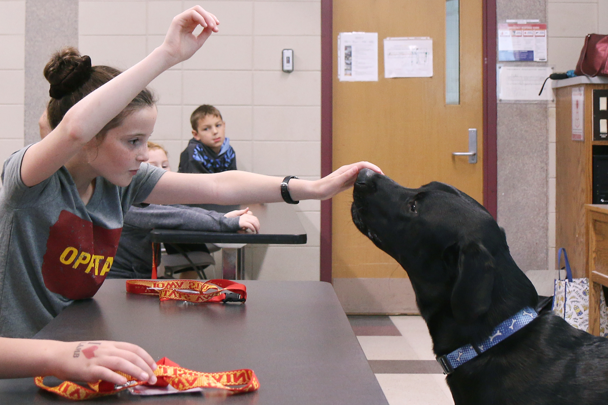 A student practices training a dog.
