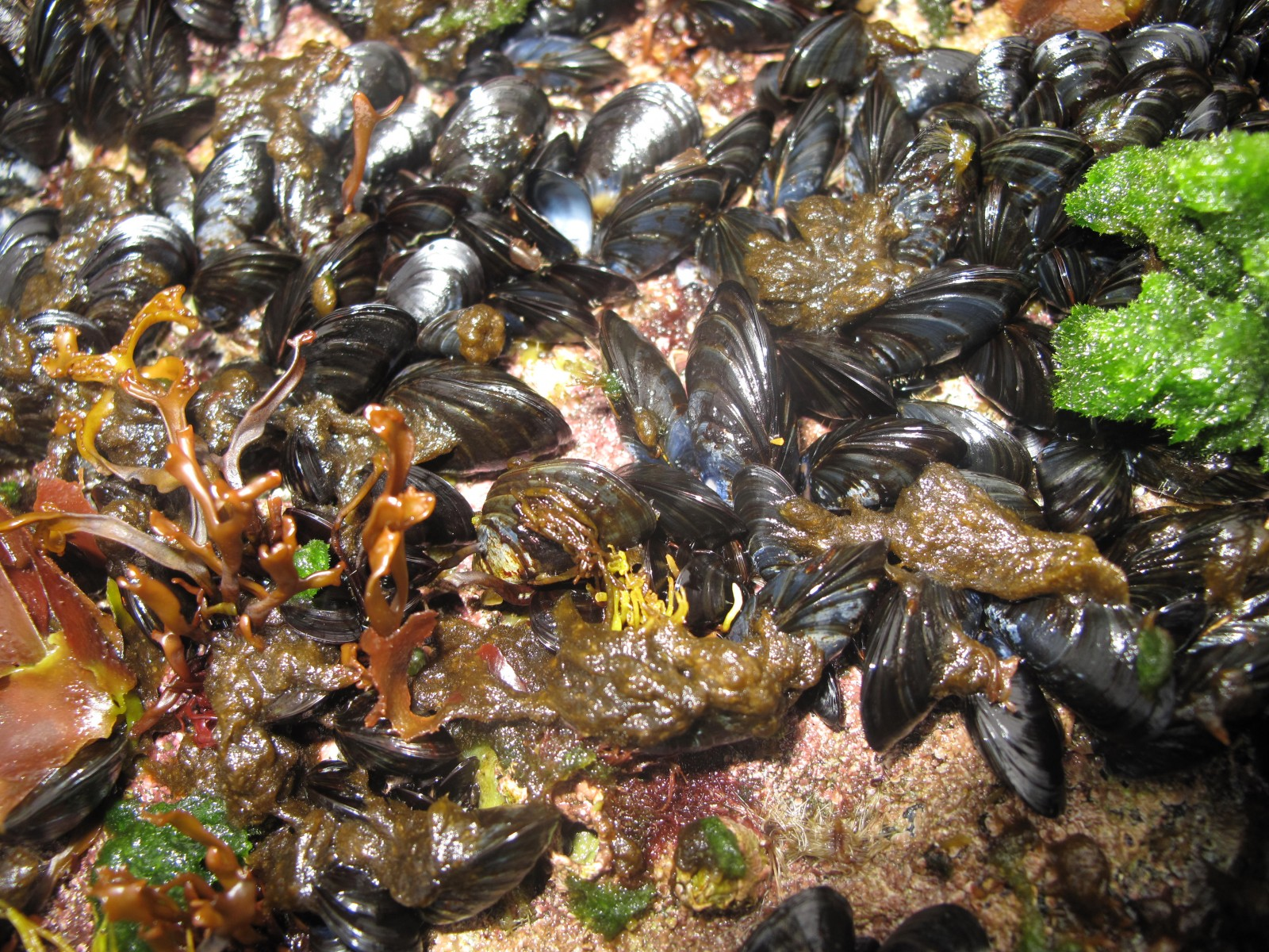 Blue mussels – we collected some of these and steamed them up for an appetizer