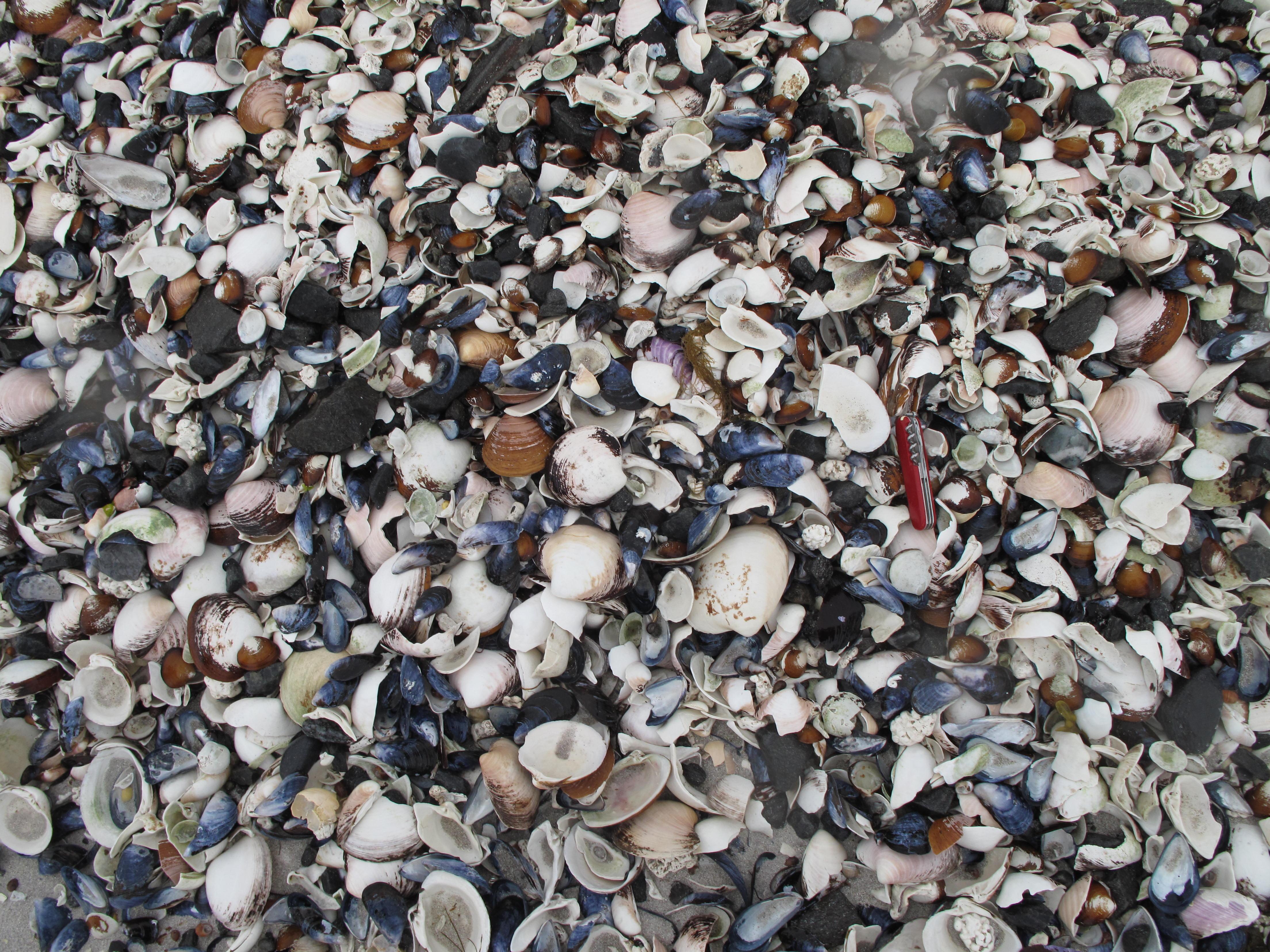 Pile 'o shells on the beach