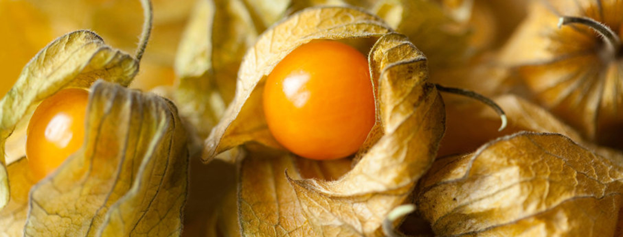 Groundcherries
